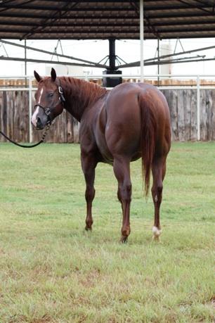ranch creek dry breeding texas stallions fee